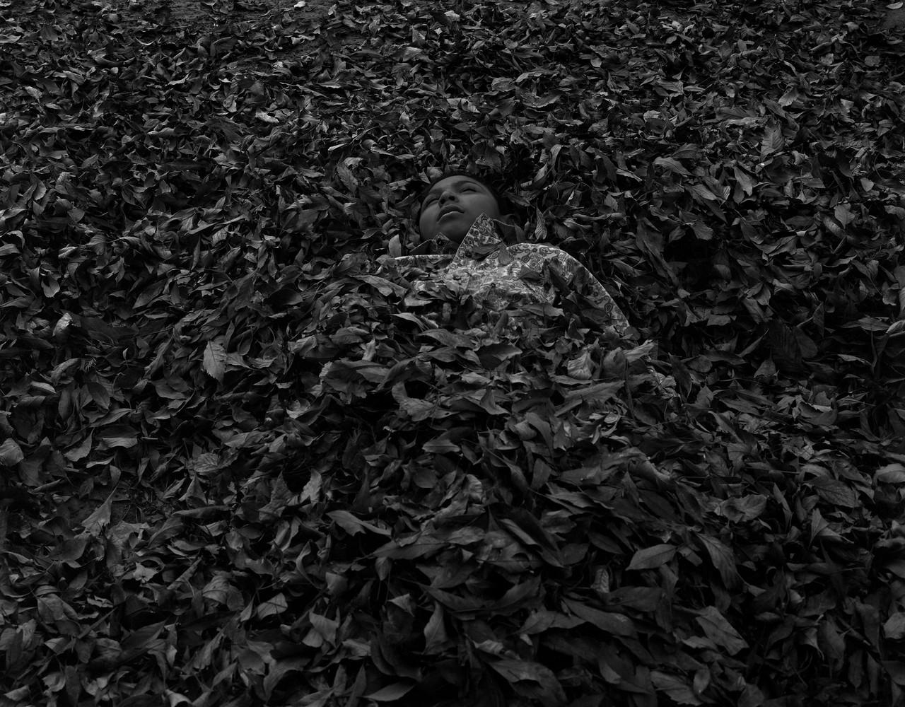 Pilo In Leaves
