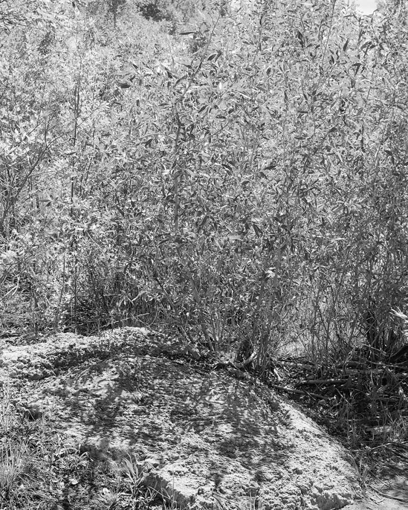 Summer Landscape (Sun's Camouflage), 2013