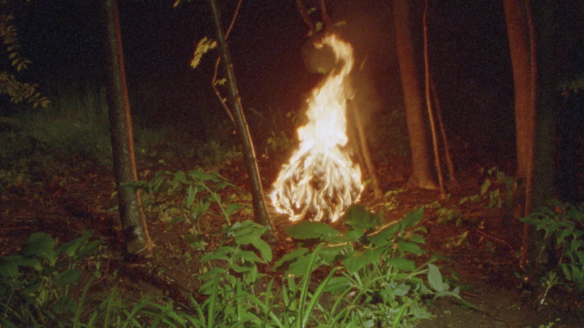 Ball of fire in a forest at night in still from Terror Has No Shape (2020) by Luis Arnias